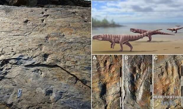 В Южной Корее обнаружили следы двуногих крокодилов