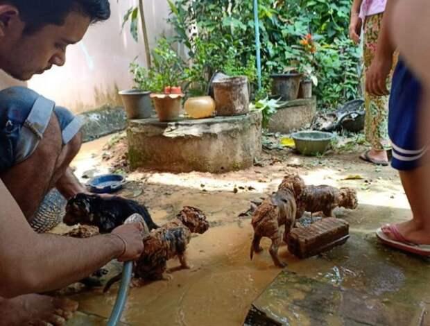 Смелый парень не раздумывая прыгнул в яму с грязью, чтобы спасти щеночков
