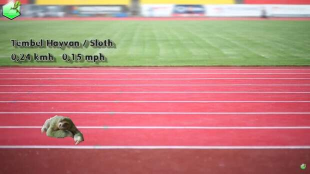 Видео: От самого медленного к самому быстрому — с какой скоростью бегают животные