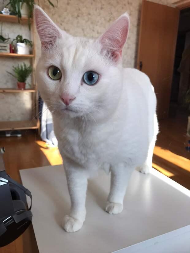 Волшебная таблетка для коррекции поведения кошек. Существует ли?