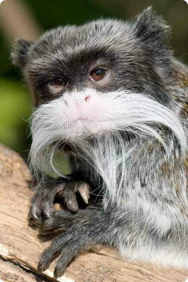 30 Самых необычных существ планеты