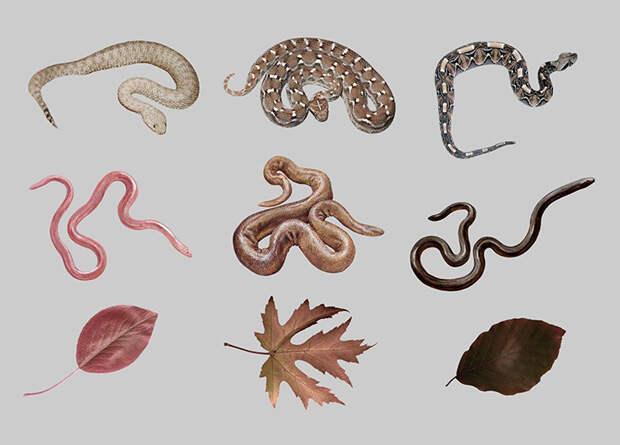 Люди отличили гадюк от неядовитых змей на физиологическом уровне