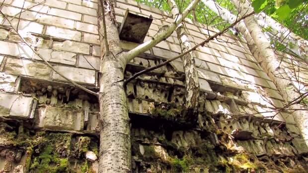 chnpp07 Оживающий Чернобыль