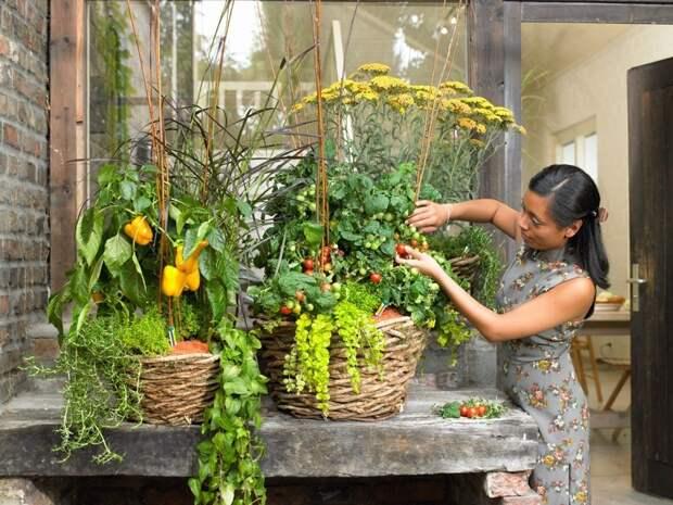 Огород в квартире круглый год: полный гид