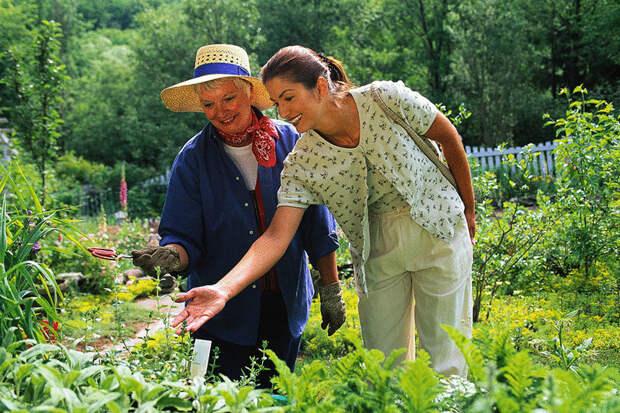 Инфекционное заболевание растений — фузариоз: как бороться.