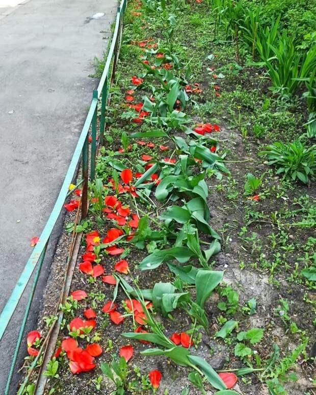 Жителей Марфина попросили не топтать цветы на клумбах