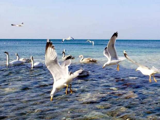 Странствующий-альбатрос-Описание-и-образ-жизни-странствующего-альбатроса-2