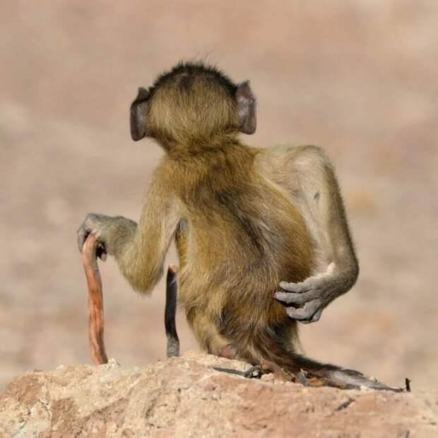 Премия комедийной фотографии дикой природы-2020: часть 2