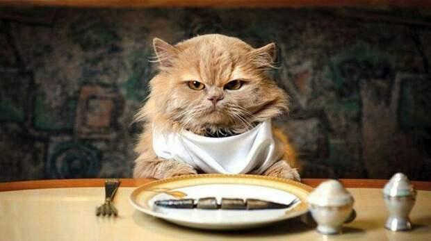 6. Кошка ест меньше. жены, интересное, кошки, юмор