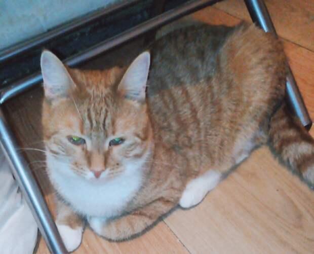 Как домашние кошки становятся уличными?? Пинком под зад, раз - и готово... Кто поможет вернуть ей веру в людей?