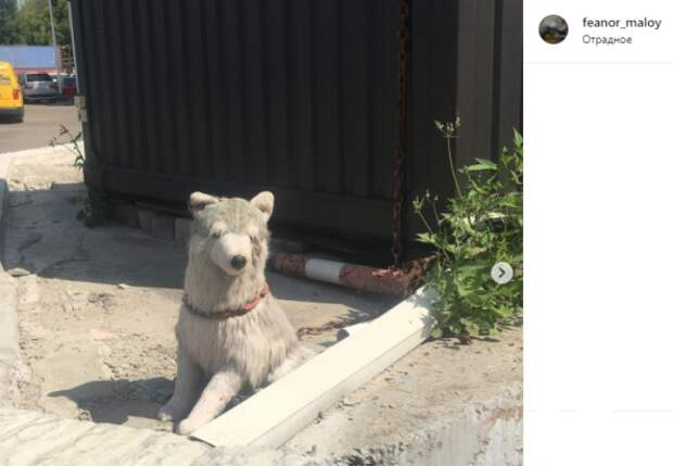 Фото дня: в Отрадном плюшевого пса посадили на цепь
