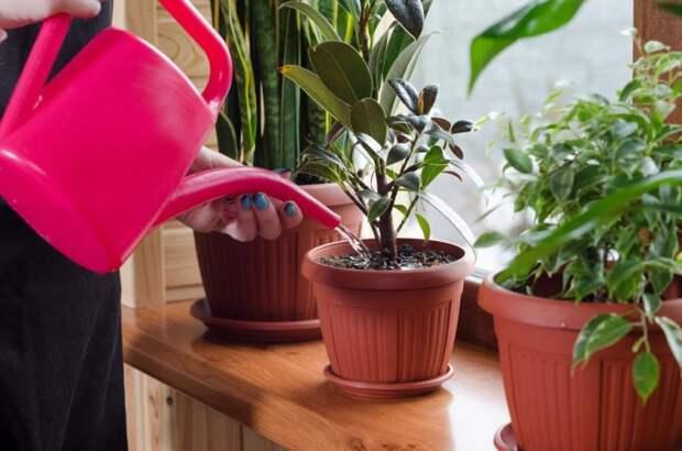 Это простое аптечное средство способно вернуть растения к жизни