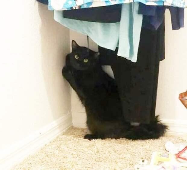 Увидев кота из окна соседской квартиры, девушка подумать не могла, что там сидят животные, которых бросила хозяйка