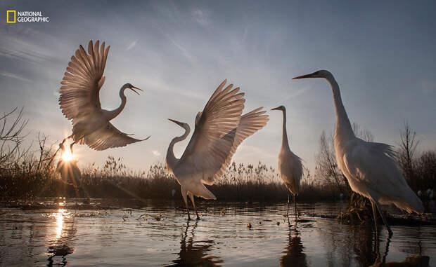 Лучшие фотографии года по версии National Geographic