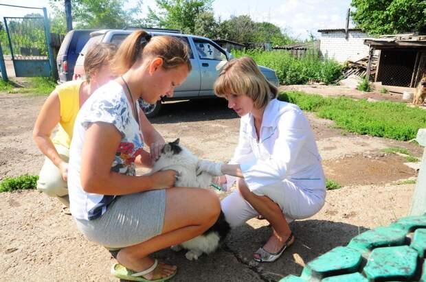 Почти 80 тысяч животных привито отбешенства вНижегородской области сначала года