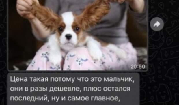 При покупке дорогого щенка житель Омска попал влапы мошенников