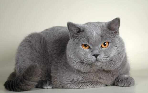 Кот хамит хозяину, а потом извиняется. Очень смешной говорящий кот
