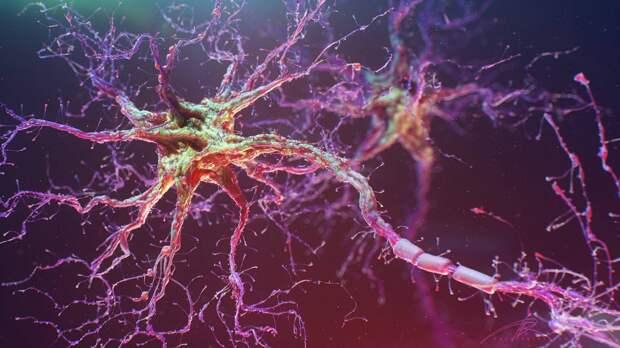 Картинки по запросу 86 миллиардов нейронов