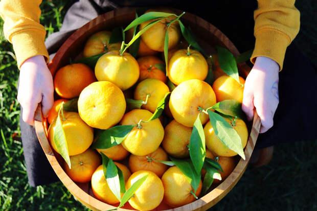 Гид по мандаринам: учимся различать сорта