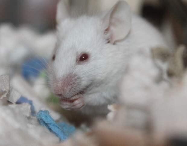 В Ижевске лабораторные животные погибли после «испытания» пэками