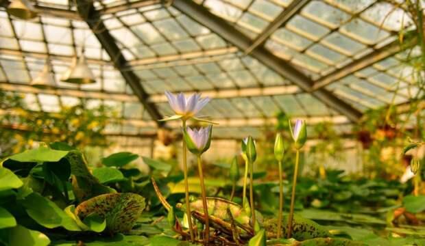 Ботанический сад продаёт излишки