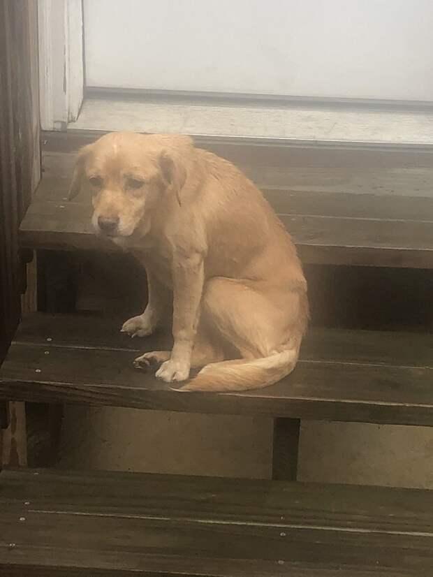 Спустившись вниз, женщина поразилась: перед ней сидела собака. Все бы ничего, но у семьи не было питомцев