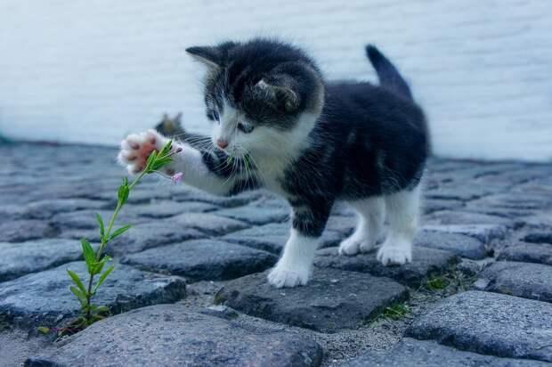 На фото изображен котенок, который играет с цветком.