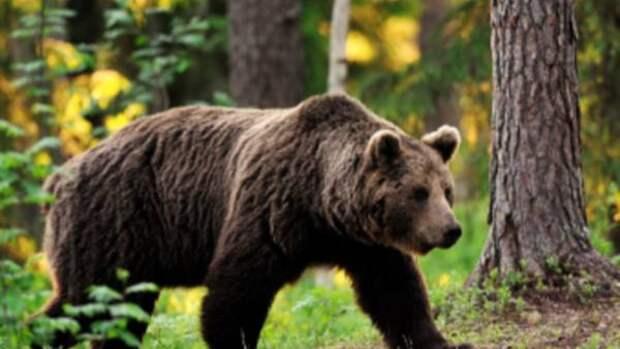 Принца Лихтенштейна обвинили в убийстве медведя-гиганта
