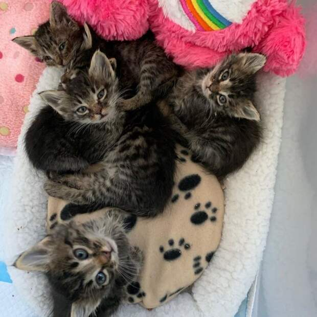 Старый боевой кот не устоял, услышав плач осиротевших котят