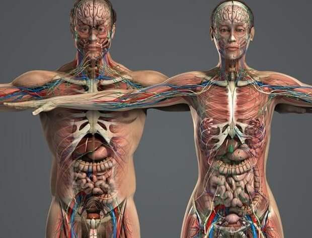 ЗДРАВОТДЕЛ. Продукты, снижающие плотность костей