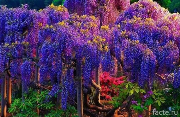 Ядовитые растения, которые можно встретить в России