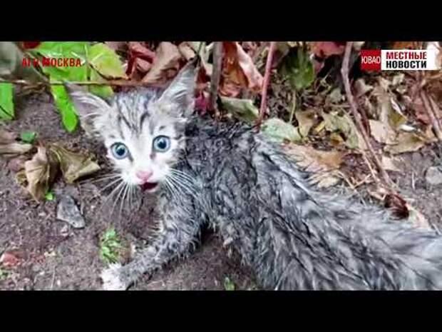 На Братиславской остановили движение ради спасения котёнка