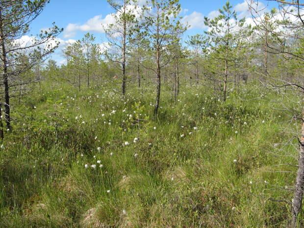 Торфяные болота против глобального потепления