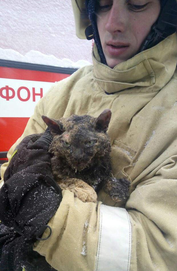 Из под завалов взорванного дома в Воронеже спасли чудом уцелевшую кошку