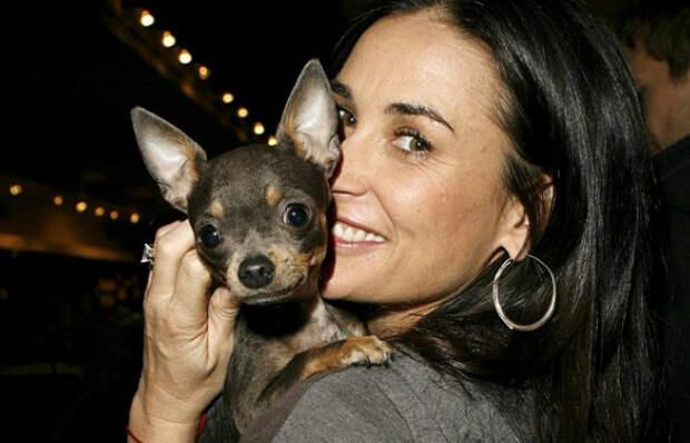 Деми Мур со своей карманной собачкой