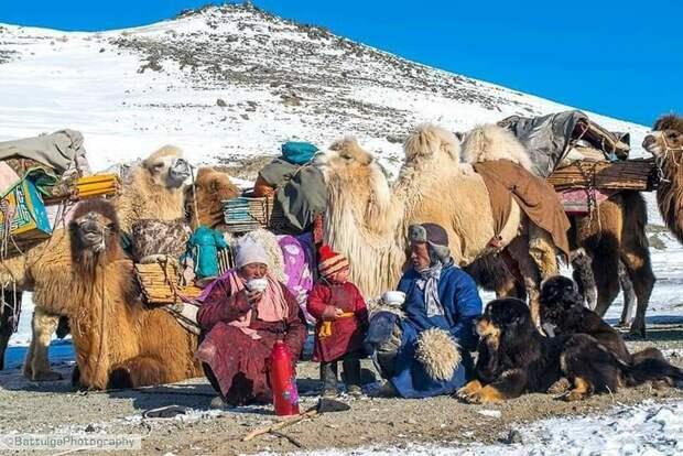 Банхары: как собаки способны спасти монгольские степи и восстановить экосистему