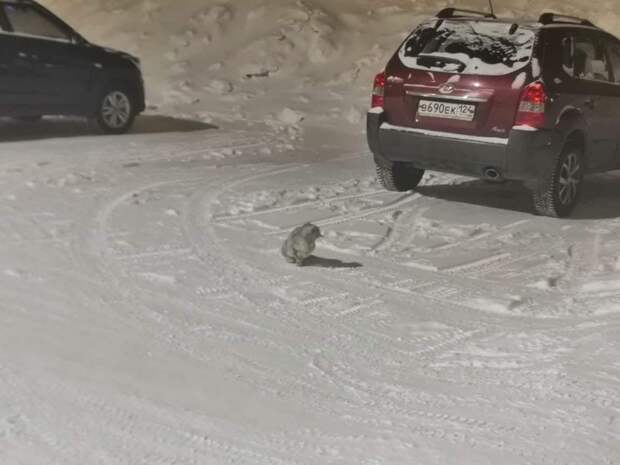 кошка в снегу