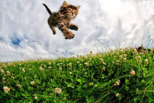 Котята, которые умеют цепляться когтями, в фотографиях Сета Кастила (11 фото)