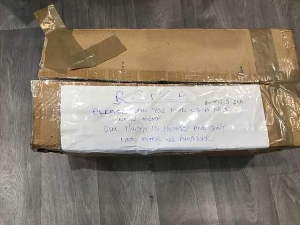 Кто-то бросил коробку с «живым грузом» под магазином. К ней была приклеена записка с просьбой помочь тем, кто внутри