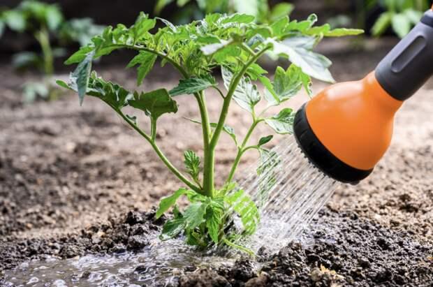 Прополка, рыхление, полив. Как правильно ухаживать за огородом