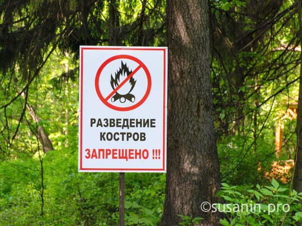 В Удмуртии сняли запрет на посещение лесов
