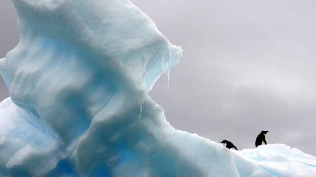 Японцы «положили глаз» на Западную Антарктиду