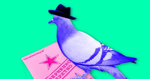 Как ЦРУ использовало животных для шпионажа в СССР