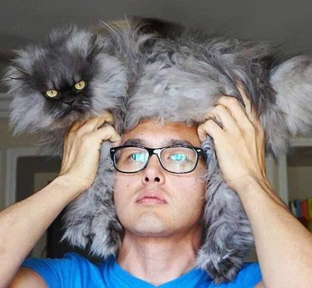 14. Невероятно теплый головной убор Популярность, животные, идея, интернет, кот, фото, шапка