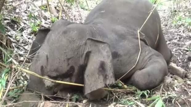 ВИндии отудара молнии погибло 18 диких слонов— очевидцы