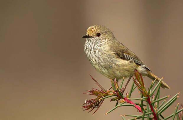Птицы умирают молодыми, если вокруг агрессивная среда и много хищников