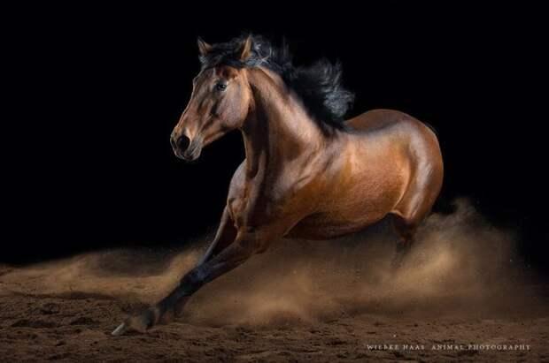 Вихрь животные, искусство, лошади, фотография