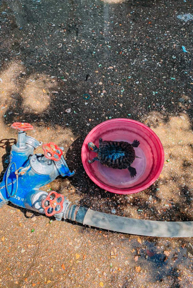 В Севастополе пожарные  вынесли из горящей квартиры черепаху