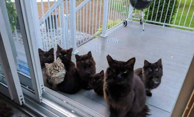 Женщина покормила кошку с улицы, а некоторое время спустя она привела на крыльцо всех своих котят