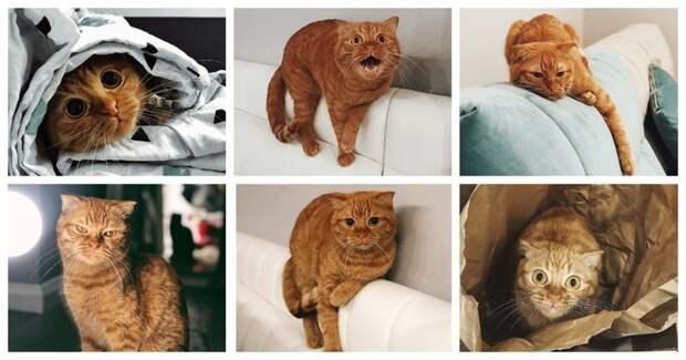 Ко Дню защиты домашних животных домашние животные, животные, коты, питомцы, собаки